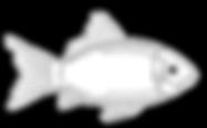 fish-2.png