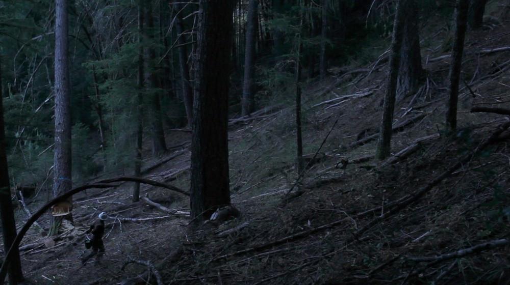 Behind the Redwood Curtain 02.jpg