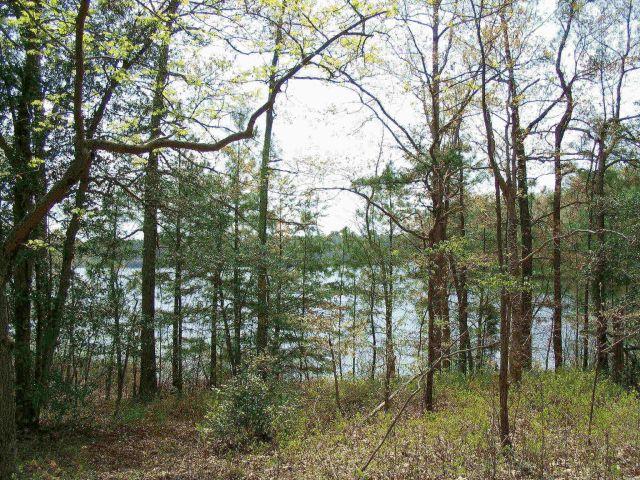 Trees_and_Lake