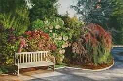 Beside Hydrangeas, Government House Garden