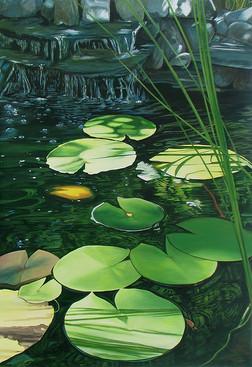 Pond & Waterlily Leaves