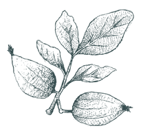 URANIA Luminous Essence | ウラニア ルミナスエッセンス | ポイント | Gardenia Fruit Extract | クチナシ果実エキス