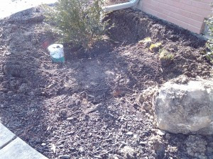 Pacocha - Low area ready for additional top soil and boxwood relocation