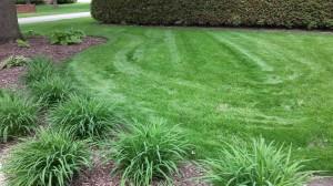 Pacocha - Lawn Repair by Seed 5-22-14