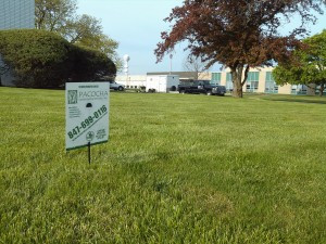 Pacocha - Large Open Lawn Area Post Lawn Care Application