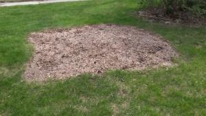 Pacocha - Tree Stump Removed 3