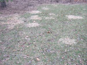 pacocha-patches-of-dormant-nimblewill-grass