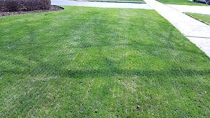 Mechanical Slit Seeding - Pacocha Landscaping Service