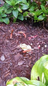 Pacocha - Red Colored Mushrooms Growing in Plant Bed