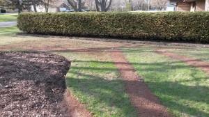 Pacocha - Lawn Repair by Seed 4-26-14
