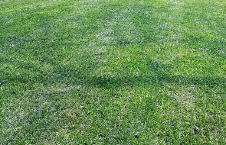 Renovated Lawn - Mechanical Slit-Seeding