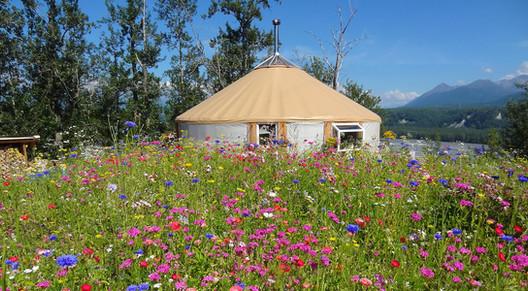 30' Yurt In Flowers