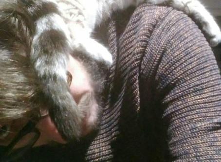 De Conserven van Van erve met de kat in de nek