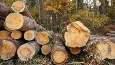 Ağaç ve Orman Ürünleri