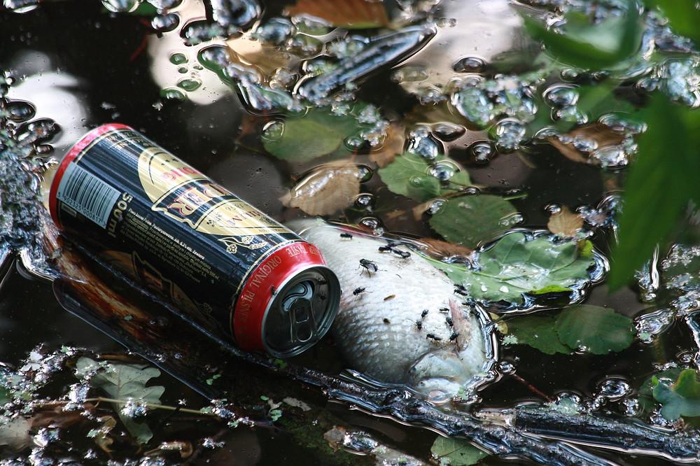"""""""Erst wenn der letzte Baum gerodet, der letzte Fluss vergiftet, der letzte Fisch gefangen ist, werdet Ihr merken, dass man Geld nicht essen kann."""""""