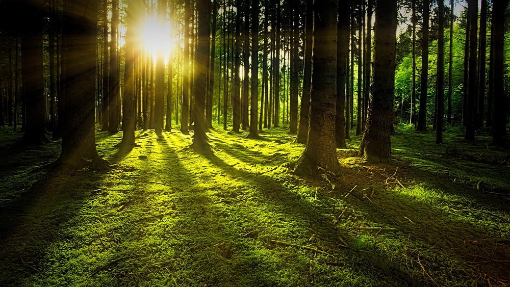 Mein Kraftort Wald