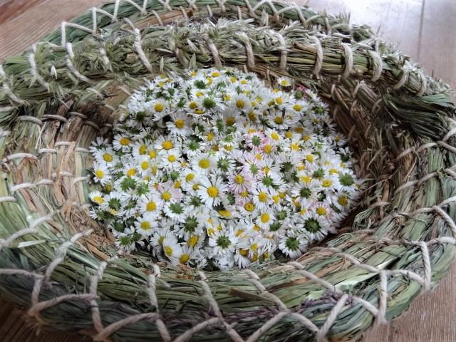 Ein Körbchen voller wunderschöner Gänseblümchen