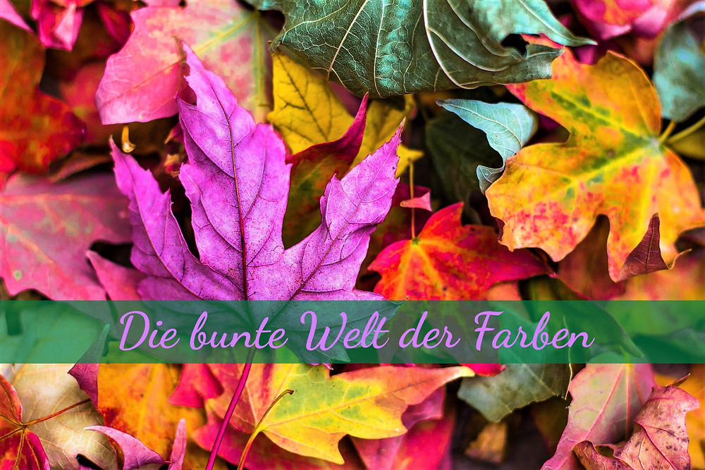 Farbenprächtiges Laub im Herbst