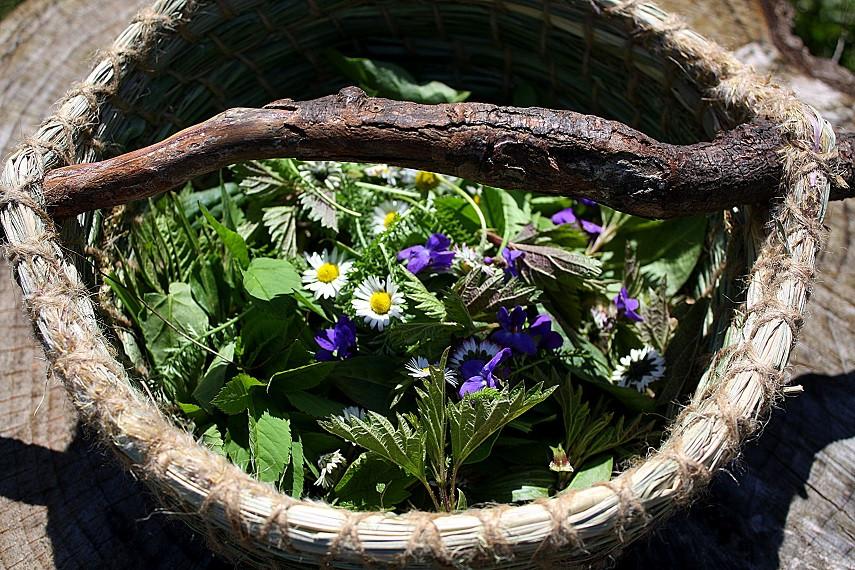 Sammeln von Frühlingskräutern