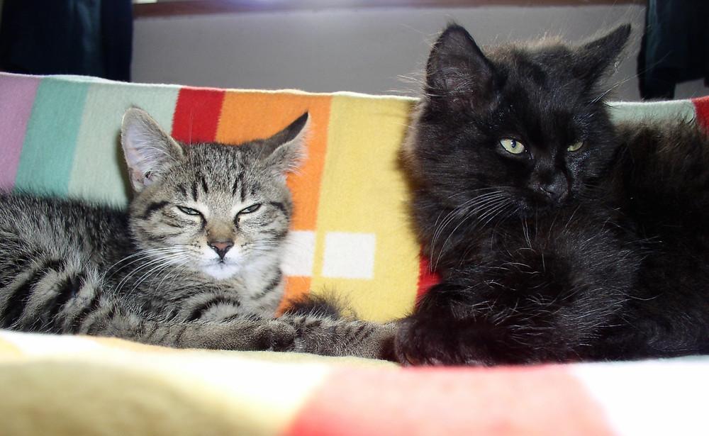 Arwen und Gandalf beim Ausruhen