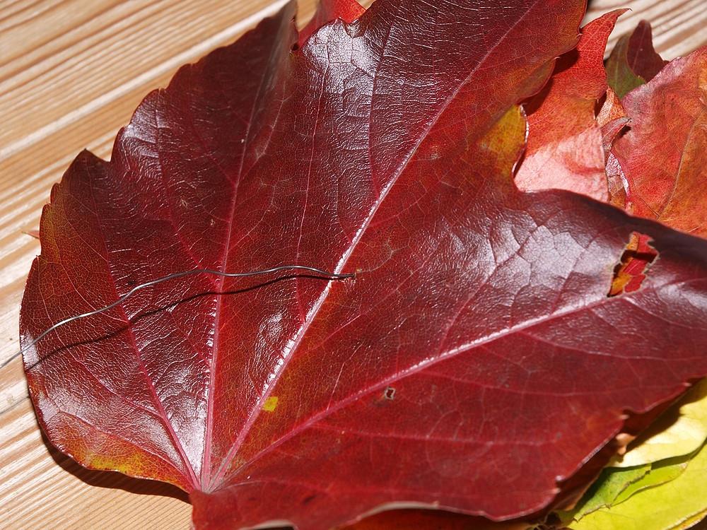 Die Blätter werden auf den Draht gefädelt