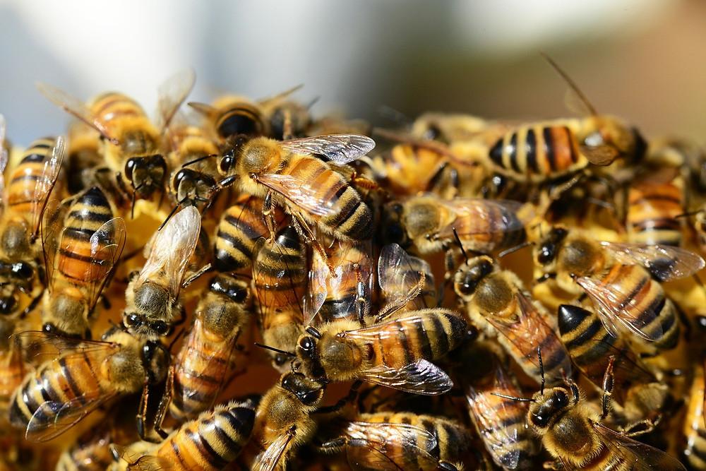 Unsere Fleißige Honigbiene