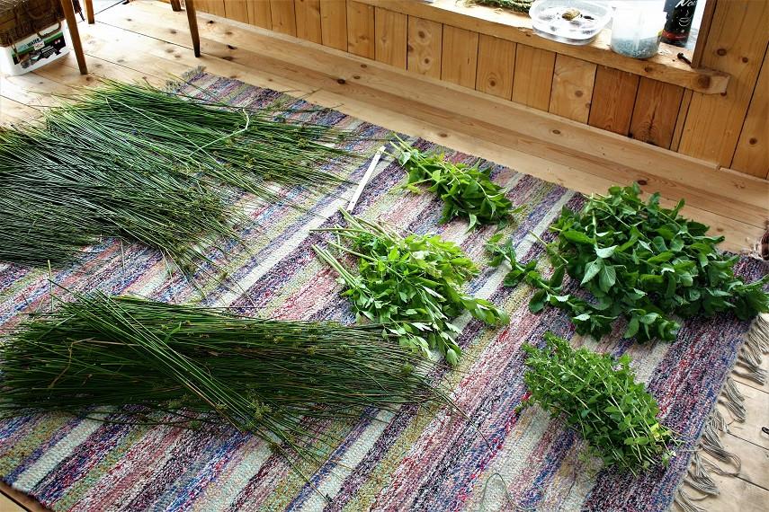 Geerntete Kräuter und Gräser vor dem Bündeln