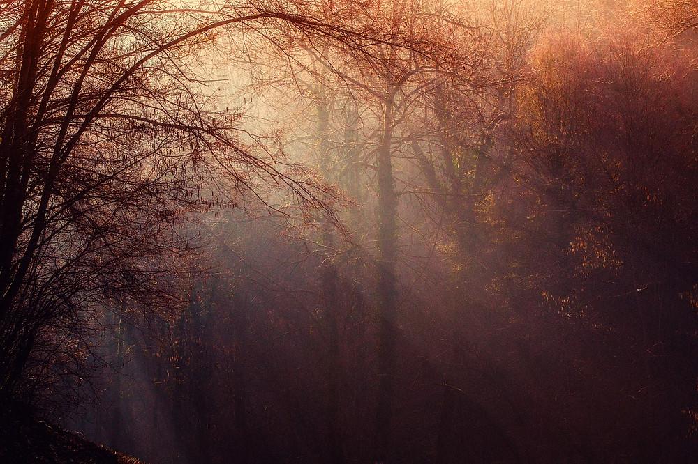 Meine Kraftquelle Wald