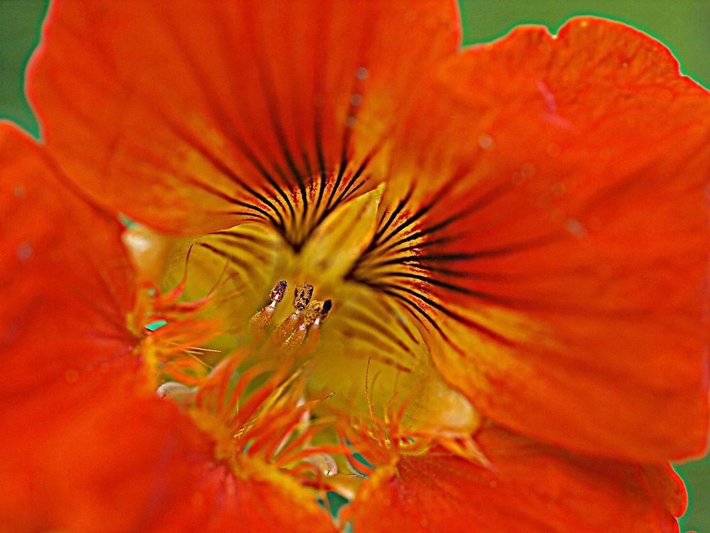 Das wunderschöne Innere der Blüte