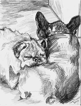 Pencil Drawing-Dog portraits/Karen Westheimer/Graphic Artist