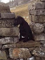 Yorkshire dry stone walling ian layfield 2