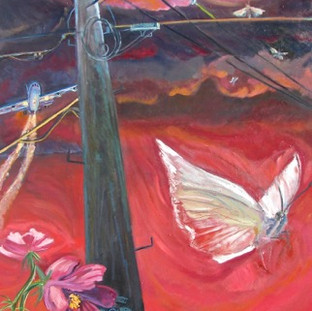 Moth and Cosmos   2016