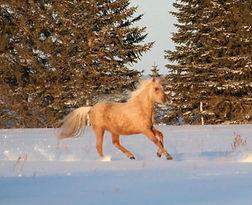 gallow side snow 2021.jpg