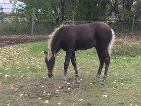 Erica's foal.jpg