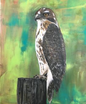 Hawk, at rest