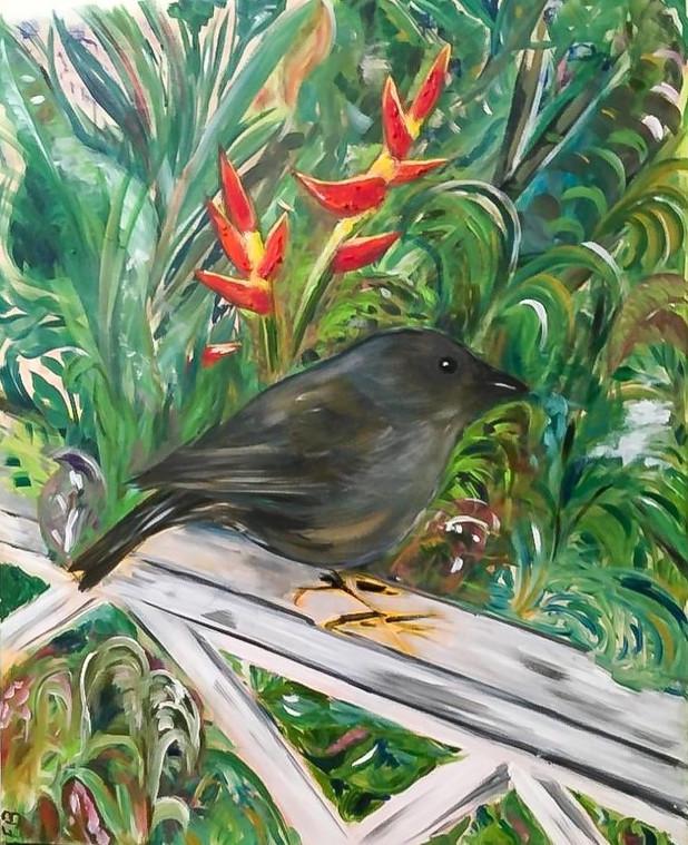 Finch in Garden