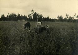Рожь 1923 г.