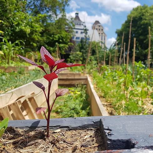 Visite guidée Jardin21⎜les secrets d'un jardin-potager en ville  (1)