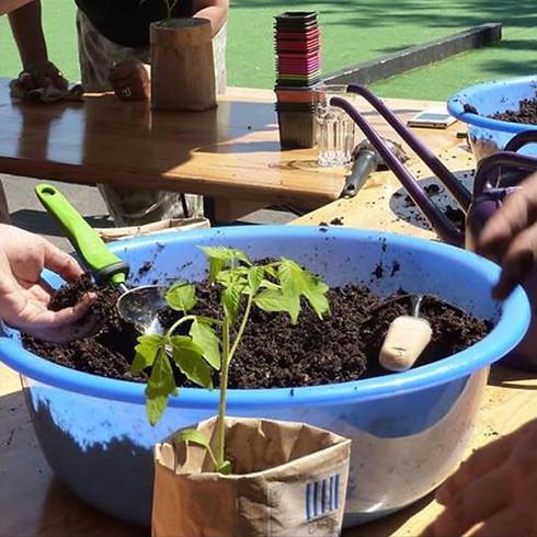 Atelier jardinage : semis et repiquage zéro déchets