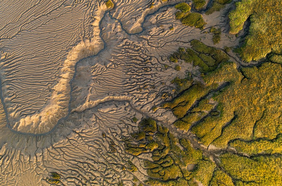 Salt marsh details at sunset