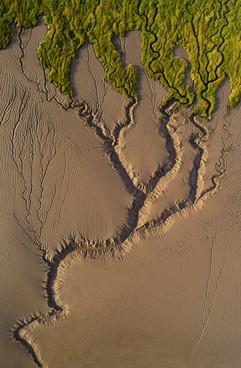 Salt marsh delta or tree?