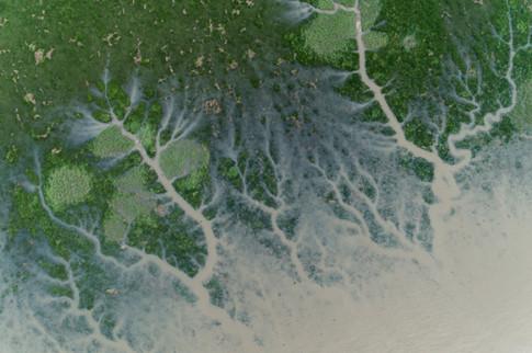Salt marsh delta at high tide