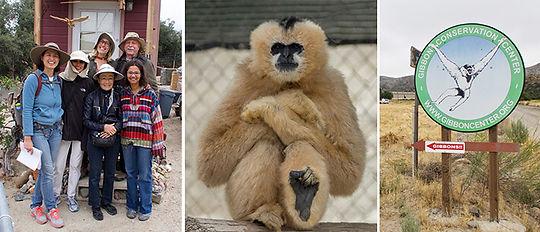 gibbon-conservation-center.jpg