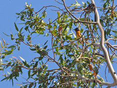 What Bird is Hiding in the Tree