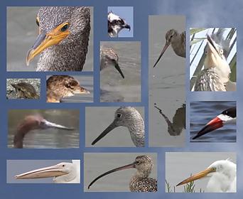 bird_gallery.png