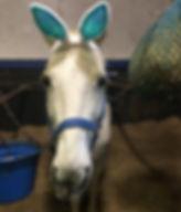 Humphrey Bunny.JPG