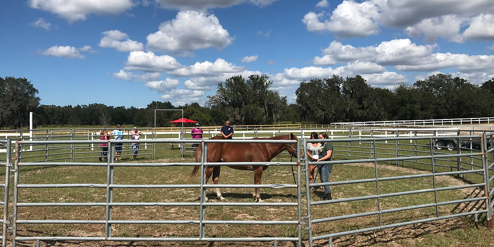 Stable Moments Certification Training - Florida