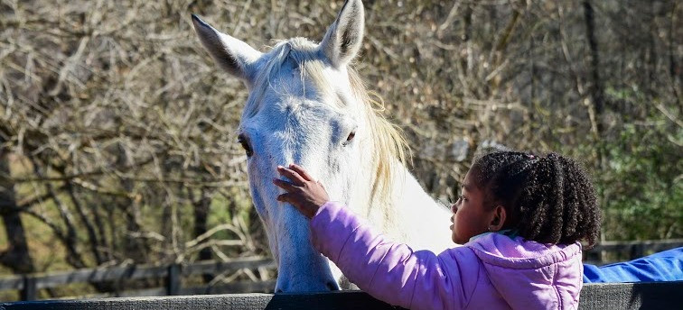 foster care, adoption, mentorship, equine assisted learning