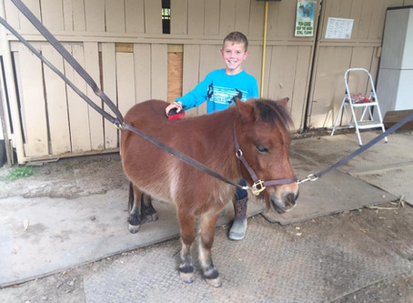 3 Ways to Build Self-Esteem at the Barn