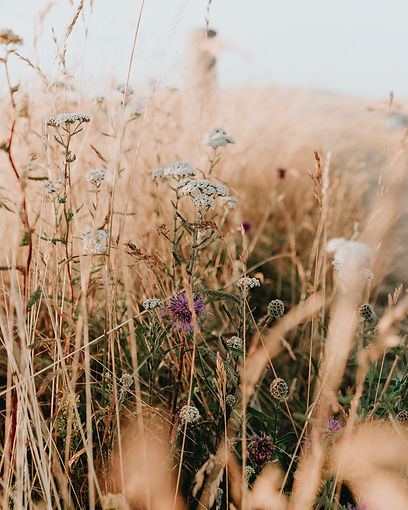 photo-of-white-flowers-3014039.jpg